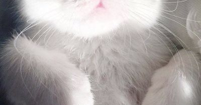Die Augen dieser Katze verzaubern jeden