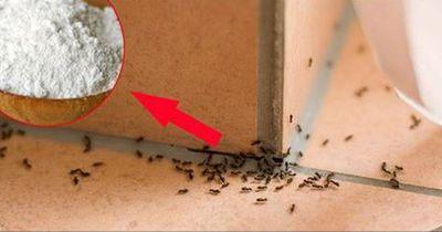 So wird man Ameisen dauerhaft los