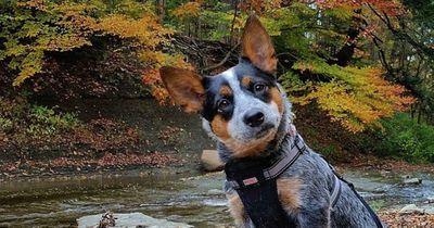 Mit diesen Schwanzbewegungen will dir dein Hund etwas wichtiges sagen