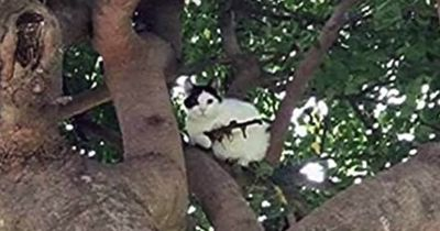 Diese Katze setzte ein ganzes Polizeirevier unter Schock