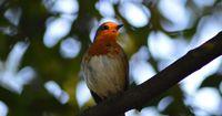 Vögel: Es werden in Deutschland immer weniger