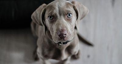 Nachdem er seinen Hund adoptiert hat, bleibt er eines Tages einfach stehen