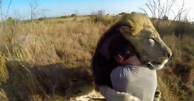 Der Löwenflüsterer: Bilder die einem den Atem stocken lassen