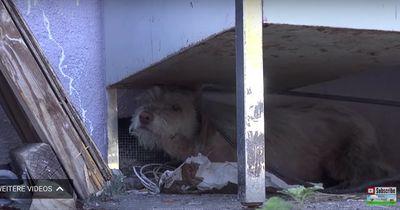 Einzigartige Hilfsaktion für verwahrlosten Hund