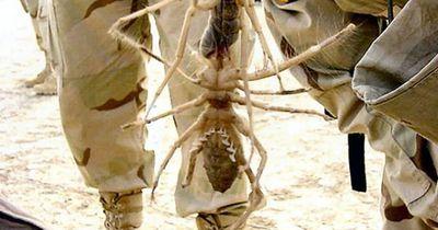 Das sind die ungewöhnlichsten Spinnen der Welt!