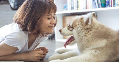 Darum sollte dir dein Hund niemals über die Lippen schlecken