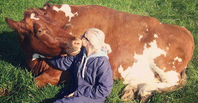 Deshalb sind Kühe einfach großartig