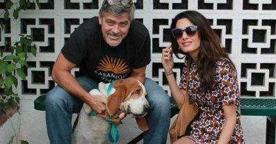 So setzen sich die Clooneys für den Tierschutz ein