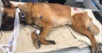 Dieser Hund rettete seinem Herrchen das Leben...