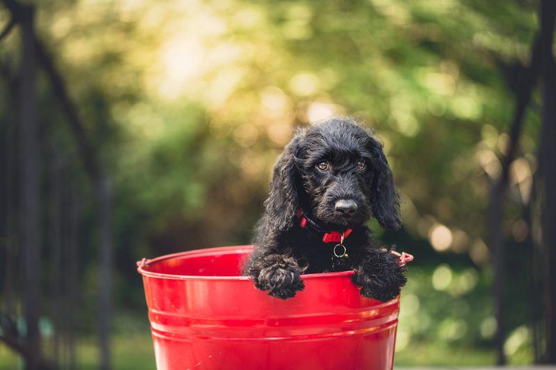 Ein Mann möchte seinen Hund taufen, doch ...