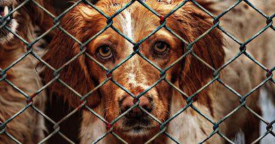 """No-Kill"" vs. ""High-Kill"": Das steckt hinter den Massentötungen in amerikanischen Tierheimen"