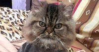 Diese Katze hat ganz schön Pech beim Friseur