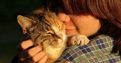 Das bedeutet es wirklich wenn deine Katze mit dir kuschelt