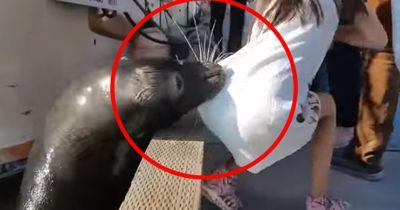 Seelöwe schnappt sich Mädchen und zieht es ins Meer