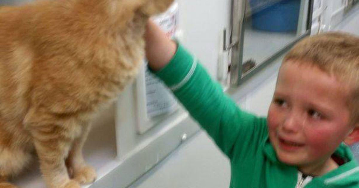 Er wollte nur eine neue Katze aus dem Heim holen