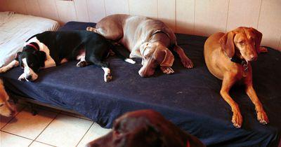 Tierheime: So kannst du sie unterstützen