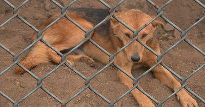 China will nun den Verkauf von Hundefleisch verbieten