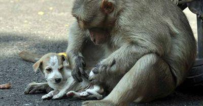 Das ist das rührendste Paar Indiens
