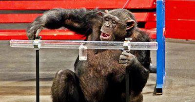 Diese umstrittene Tiershow wird es in Deutschland nicht mehr geben