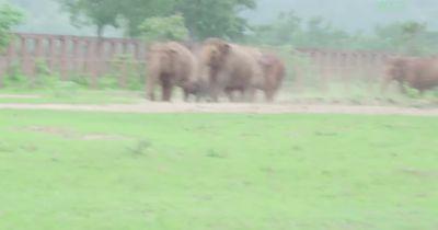 Unglaubliche Szenen aus dem Elefanten-Park