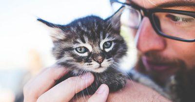 Du liebst Katzen? Dann ist das der perfekte Job für dich!