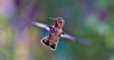Dieser kleine Vogel weicht seinem Retter nicht von der Seite