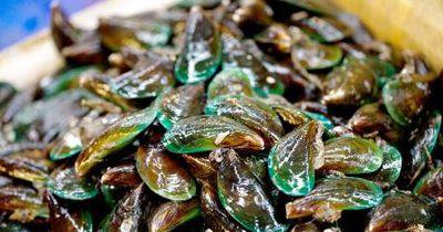 Eine der gefährlichsten Tierarten der Welt ist... die Muschel!