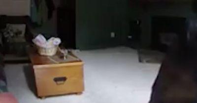 Das Video dieses Einbrechers ist wirklich einmalig