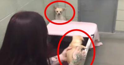 Diese Videos von Hunden, die mit ihren Menschen wiedervereint werden, wärmen jedes Herz!