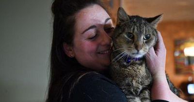 Ihre Katze schien für immer vermisst