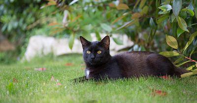 Zuerst glaub niemand, was dieser Katze aus dem Wald folgt