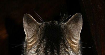 Ihre Augen machten diese Katze berühmt