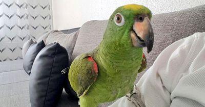 Sein entflogener Papagei sprach nur Türkisch