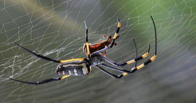 Du hast Angst vor Spinnen?