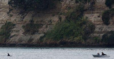 Killerwale jagen Fischer in Alaska