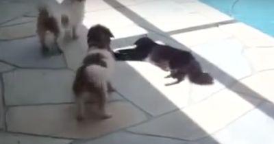 Die Hunde wurden ihr zu aufdringlich - und die Katze nimmt Rache!