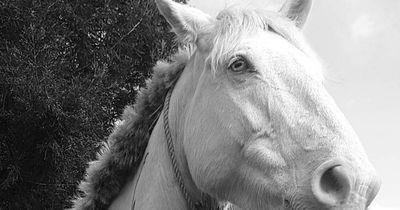 Dieses Pferd schockiert alle!