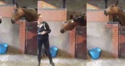 Sie macht Musik an - und plötzlich beginnt ihr Pferd zu tanzen!