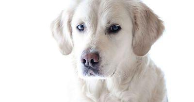 Wer dieses Verhalten bei seinem Tier beobachtet, sollte direkt zum Tierarzt