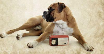 Wau: Jetzt gibt es das erste Radio für Hunde!