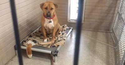 Niemand wollte diesen Hund adoptieren und keiner wusste warum