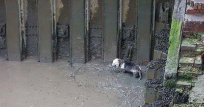 Aufwendige Rettungsaktion für eingekeilten Hund