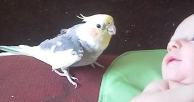 Dieser Vogel kümmert sich rührend um ein Baby