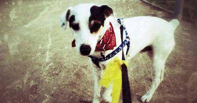 Das bedeutet es, wenn ein Hund eine gelbe Schleife trägt