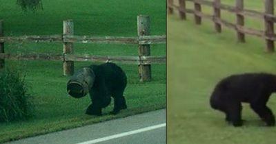Wochenlang wollte niemand diesem Bären helfen
