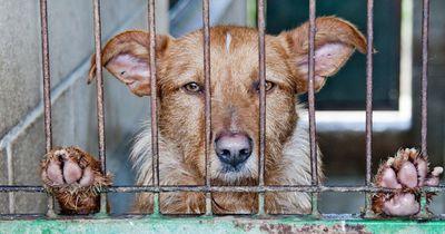In dieser Stadt ist es jetzt verboten, Tiere in Zoohandlungen zu kaufen!