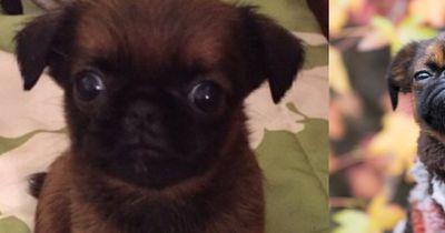 Unglaublich wie diese Hunde sich verändert haben