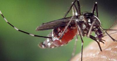 So werdet ihr Mücken natürlich los