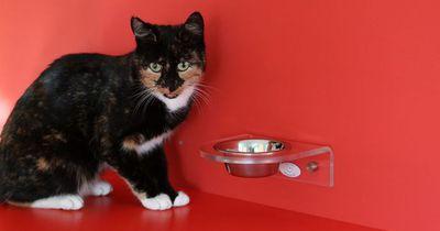 Deine Katze frisst ihren Napf nicht leer?