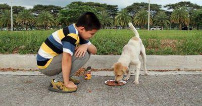Elfjähriger leistet Unglaubliches für Tiere in den Philippinen